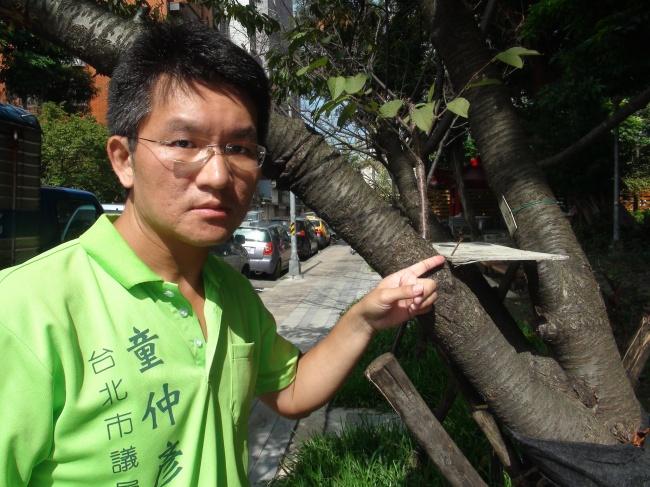 花310萬殺樹 牯嶺櫻花公園變「死樹公園」